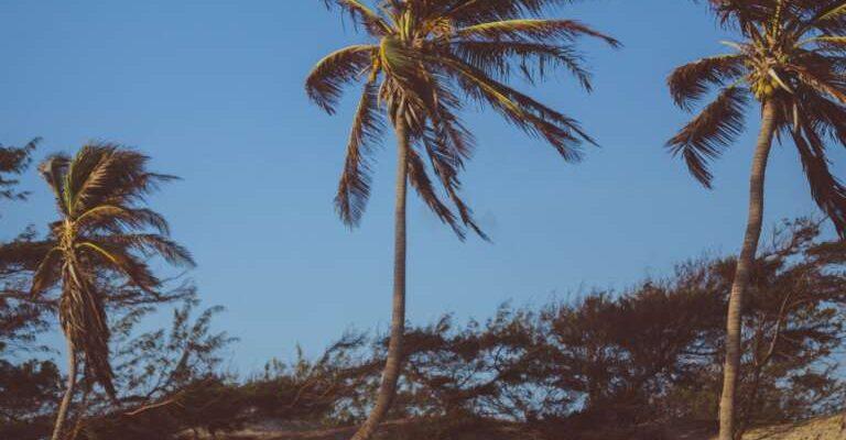 beach-blue-sky-bushes-936548-e1568036237456-768x681